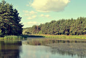 Forest and lake scenery — Stock Photo