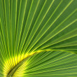 Palm-leaf close-up. — Stock Photo #23999259
