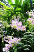 Orchideje — Stock fotografie