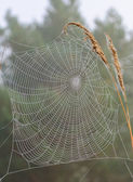Web on a blade of grass — Stock Photo