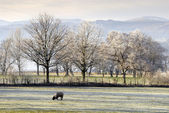 Frost Beside Ulswater, Cumbria, UK. — Stock Photo