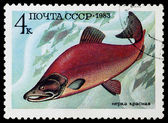 Postage stamp shows the image of a fish — Stock Photo