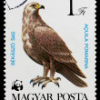 Postage stamp shows bird AquilPomarina — Stock Photo #26046801