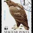 Postage stamp shows bird Aquilheliaca — Stock Photo #26046959