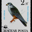Postage stamp shows bird Falco vespertinus — Stock Photo #26046961