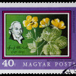 Postage stamp shows plant Waldsteinigeoides — Stock Photo #26047251