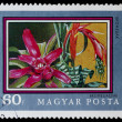 Postage stamp shows plant Bromeliaceae — Stock Photo #26047529