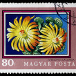 Postage stamp shows plant titanopsis calcarea — Stock Photo #26047553