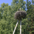 Stork in the nest — Stock Photo