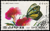 KOREA - CIRCA 1987: stamp printed by KOREA, shows the butterfly — Stock Photo