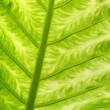 Classic background. Green leave. Close-up. — Stock Photo