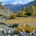 Himalaya. Tibet. Oasis on the mountain plane greenery in Spiti V — Stock Photo