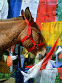 Himalaya. tibet. bhutan. paro. op de weg naar taktsang klooster — Stockfoto