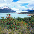 Perito Moreno Glacier, El Calafate, Los Glaciares National Park, — Stock Photo #30248313