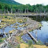 Tierra del Fuego National Park, Argentina — Stock Photo