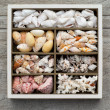 Sea shells arranged in compartments in box — Stock Photo #30572225