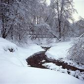 Trees in snow, Kolomenskoe, Moscow, Russia — Stock Photo