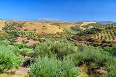 Rural scene, Crete, Greece — Stock Photo