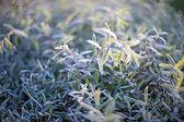 Folhas verdes na luz solar — Foto Stock