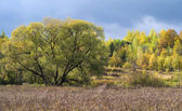 Trees in autumn, Russia — Stock Photo
