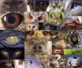 Hayvan ve böcekler gözleri — Stok fotoğraf