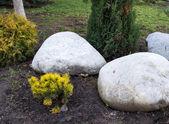 Paysage grande pierre blanche — Photo