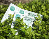 Money lying in the grass — Stock Photo