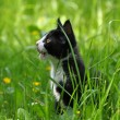 Cute kitten in high grass — Stock Photo