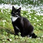 Cat in flower meadow — Stock Photo #25476537