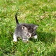 Small kitten outdoor — Stock Photo #40376747