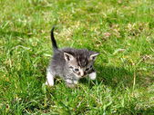 Small kitten outdoor — Stock Photo