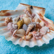 Shells — Stock Photo #24351735