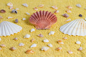 Summer shell — Stock Photo