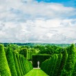 Conical hedges lines and lawn, Versailles Chateau, France — Stock Photo