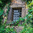 Stock Photo: Window with grill in stone wall with ivy
