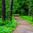 Path in woods — Stock Photo