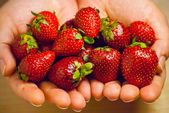 Woman hands hold red ripe strawberries — Stock Photo