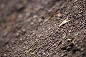 Soil — Stock Photo