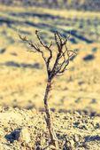 Сухие ветки в песок, строительной площадки — Стоковое фото