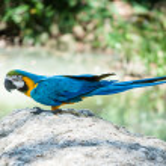 Parrot — Stock Photo #34349093