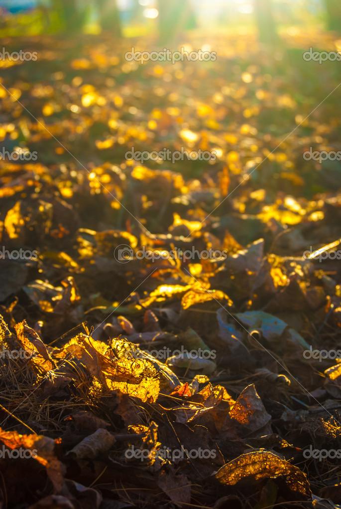 Картинки осенние листья на солнце
