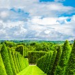 Conical hedges lines and lawn — Stock Photo #38877701