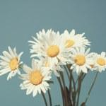 Daisies against blue sky — Stock Photo #40133225