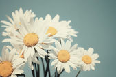 Daisies against blue sky — Stock Photo