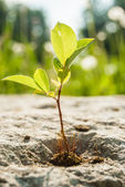 Зеленый росток — Стоковое фото
