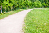 Lane in park — Stock Photo