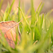 Fallen Leaf in Natural Grass Left — Zdjęcie stockowe