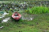 Old ship in the lotus pond — Stock Photo