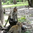 Feeding a monkeys — Foto de Stock