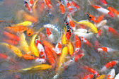 Feeding fish. — Stock Photo